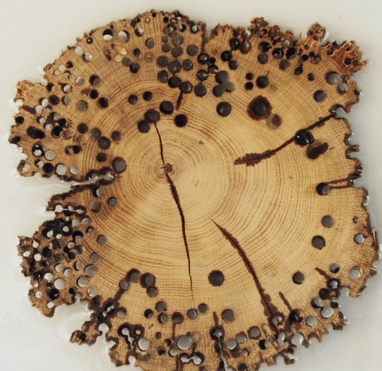 Come Pulire Il Legno Vecchio pavimenti in legno e tarli | fratelli pellizzari