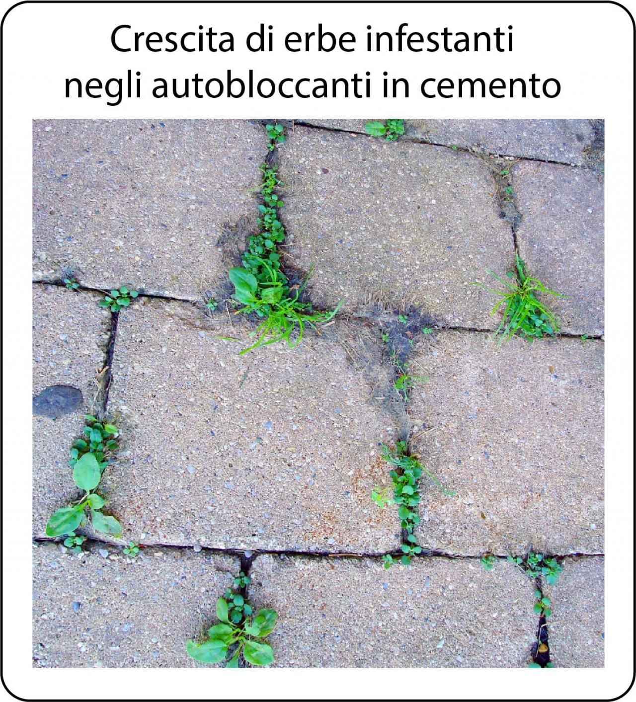 Come Far Morire Una Pianta problema erbe infestanti negli autobloccanti in cemento
